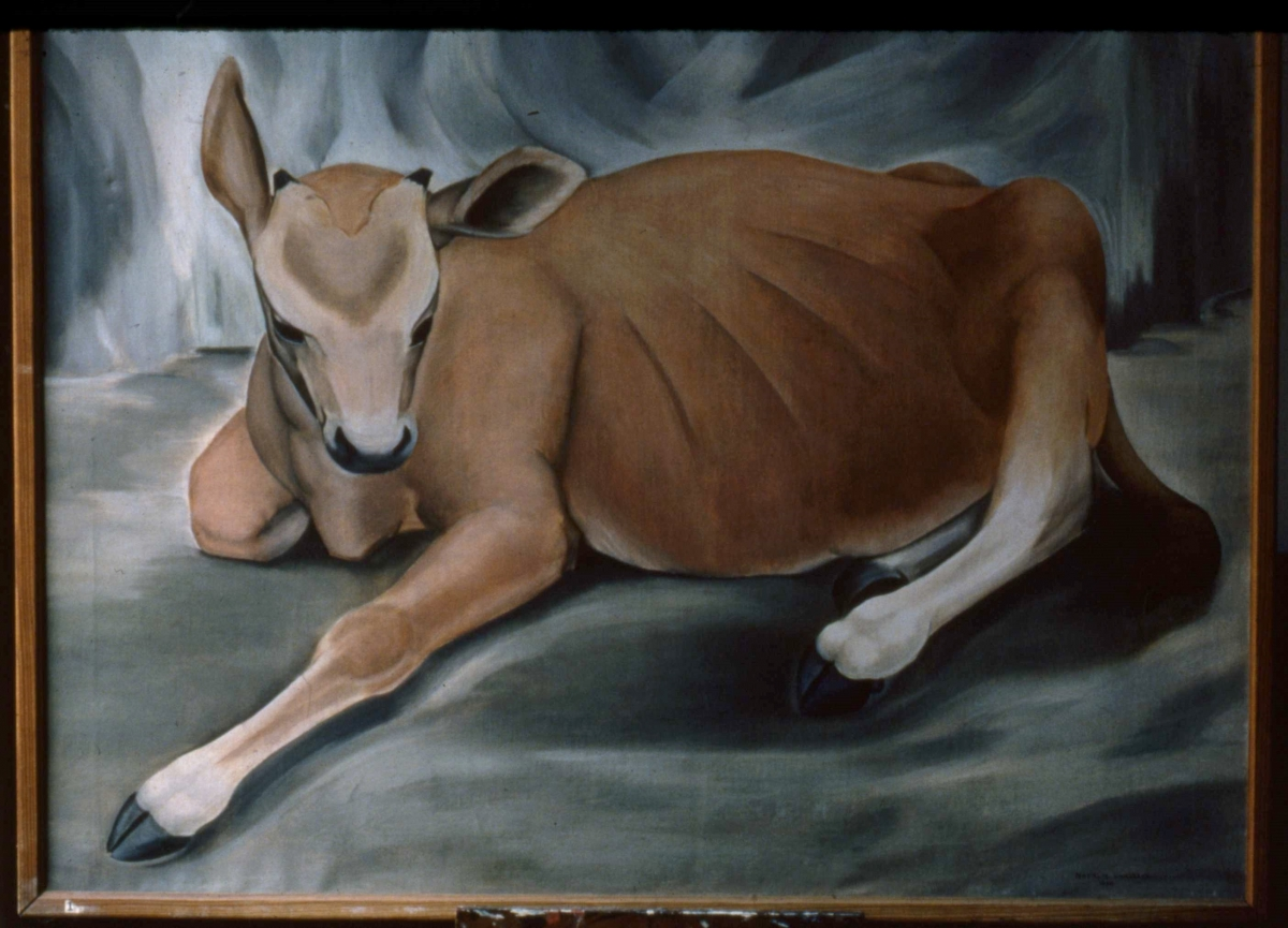 Recumbent Yearling Calf, Woodbury. Oil on canvas. 30 x 36; s, 1930.