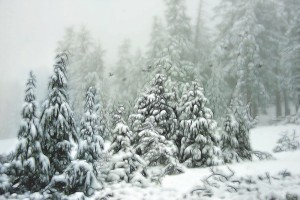 Oregon Forest Winter Scene by: Rick Sereque