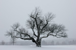 Winter Tree by: Cheryl Martinelli