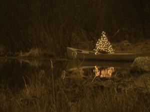 Canoe Tree by: Susan Lamphier