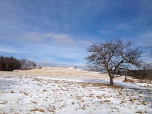 Winter at Arbutus Farm by: Deborah Donne
