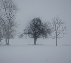 Winter Trees by: Venisa Riebe